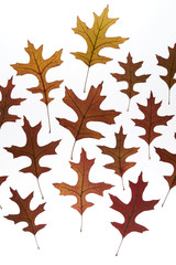 Fall maple leaves background