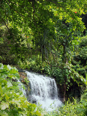 waterfall in the depths of the cloud forests