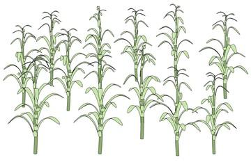 cartoon image of corn stalks