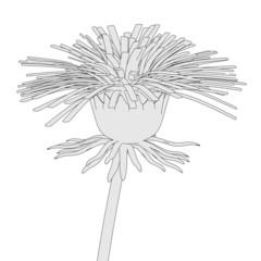 cartoon image of dandelion flower
