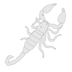 cartoon image of scorpion - black emperor