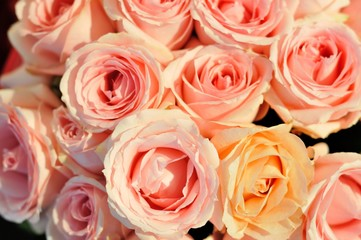 The many rose is pink color.