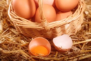 free range eggs in hen house