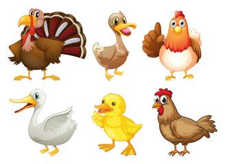 Six different birds