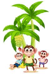 Three monkeys near the banana plants