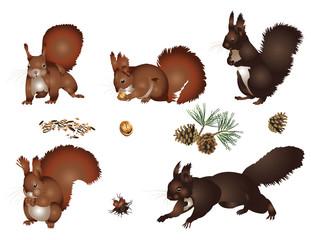 Papiers peints Squirrel Squirrels