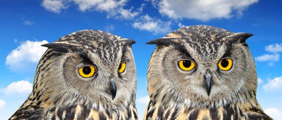 Klistermärke - Eagle Owl, Bubo bubo