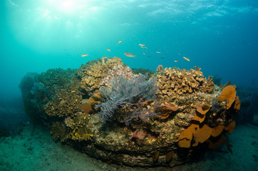 Pacific reefs