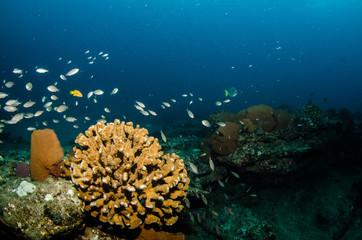 Pacific reefs