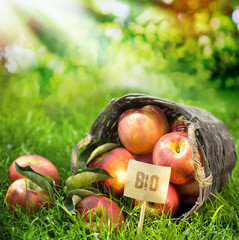 Healthy farm fresh apples graded Bio