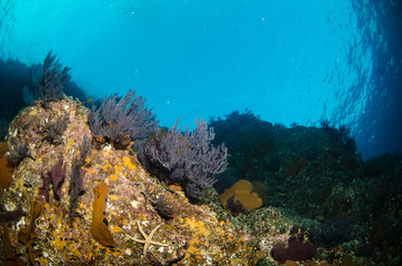 Views from pacific reefs