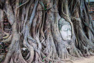 Head of Buddha in Wat Mahathat, Ayutthaya, Thailand