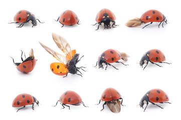Ladybug set on white background