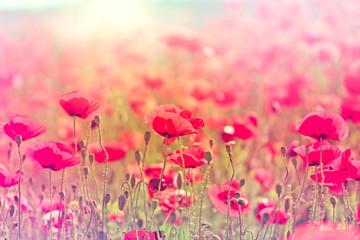 Wild poppy flower - fototapety na wymiar