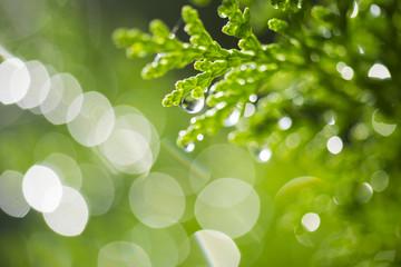 Fresh, green morning