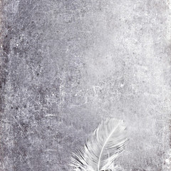 Vintage Blank gray scratched board  with white feather and copy