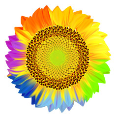 Sunflower with rainbow petals.