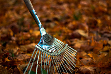 Rake on fallen leaves