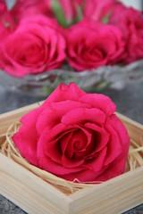 Rose in Stroh gebettet vor Blütentraum