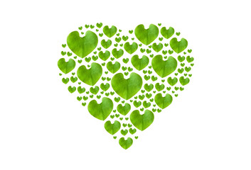 Green leaf in heart shape, isolated with clipping paths on white