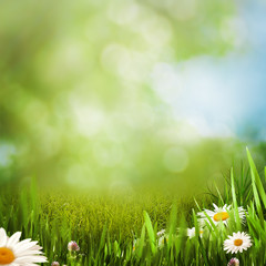 Daisy flowers on the summer meadow, natural backgrounds
