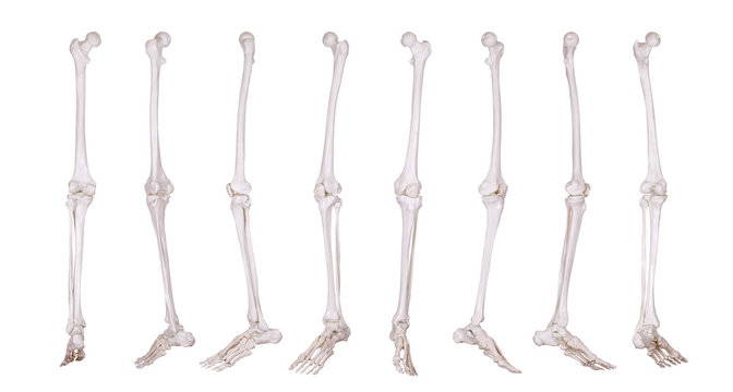 detail of skeleton leg
