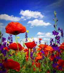 Wall Mural - Summer wildflowers and clouds