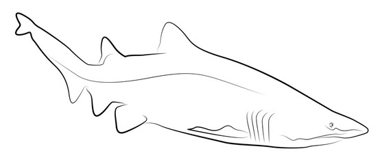 Shark Simplified Contour Silhouette