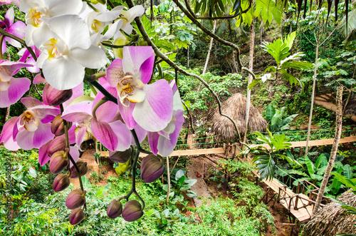 orchideen im tropischen regenwald stockfotos und lizenzfreie bilder auf bild. Black Bedroom Furniture Sets. Home Design Ideas