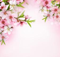 Peach flower blossom