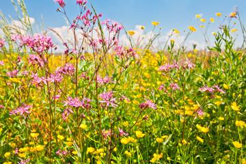 Field of beautiful flowers.