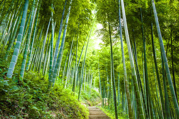 Printed kitchen splashbacks Bamboo Bamboo forest and walkway