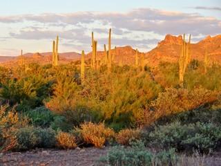 Fototapete - View of the Arizona desert near Phoenix at sunset