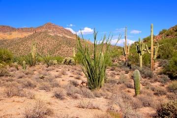 Fototapete - Arizona desert view near Phoenix