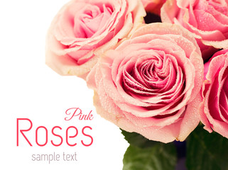 Rosebuds with water drops closeup
