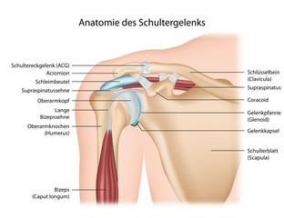 Anatomie Schultergelenk mit Beschreibung deutsch