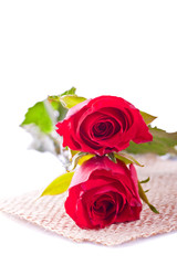 two red rose on withe background