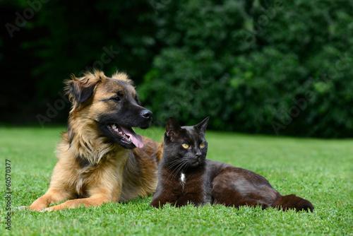Cat behaviour course uk