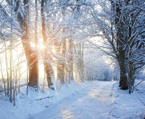 Winter road with sunlight