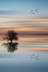 Silhouette of tree on calm ocean water landscape at sunset