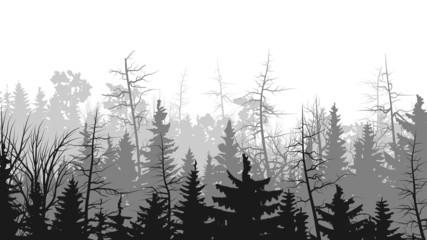Horizontal illustrations of coniferous wood.
