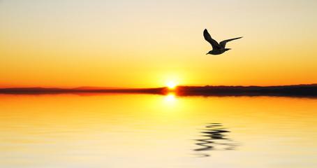 la gabiota al amanecer