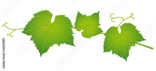 feuille de vigne 2 fichier vectoriel libre de droits sur la banque d 39 images. Black Bedroom Furniture Sets. Home Design Ideas