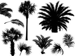 palm leaves silhouettes isolated on white