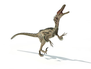Velociraptor dinosaur, scientifically correct, with feathers.