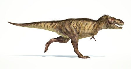 Tyrannosaurus Rex dinosaur, photorealistic representation. Side