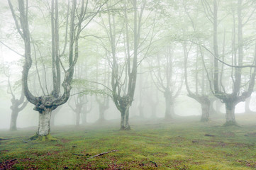 Wall Mural - forest with fog and beautiful light