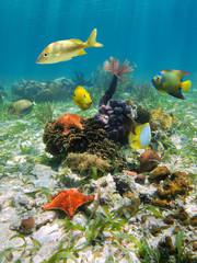 Colorful underwater marine life