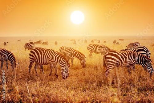 Зебры в поле загрузить