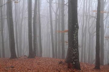 Foto op Canvas Bos in mist foresta del casentino appennino tosco emiliano